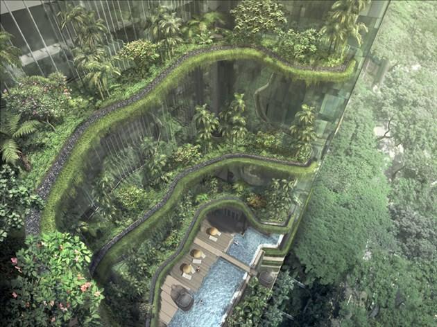 33_1331829782-garden-looking-down